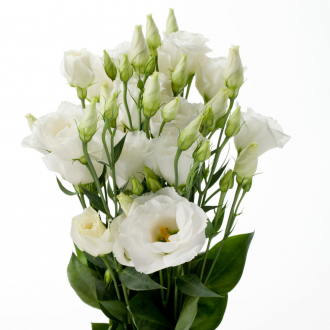 588a1594997f7_169588877_w640_h640_eustoma_white_1000x1000_pc